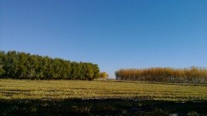 晨曦的稻田